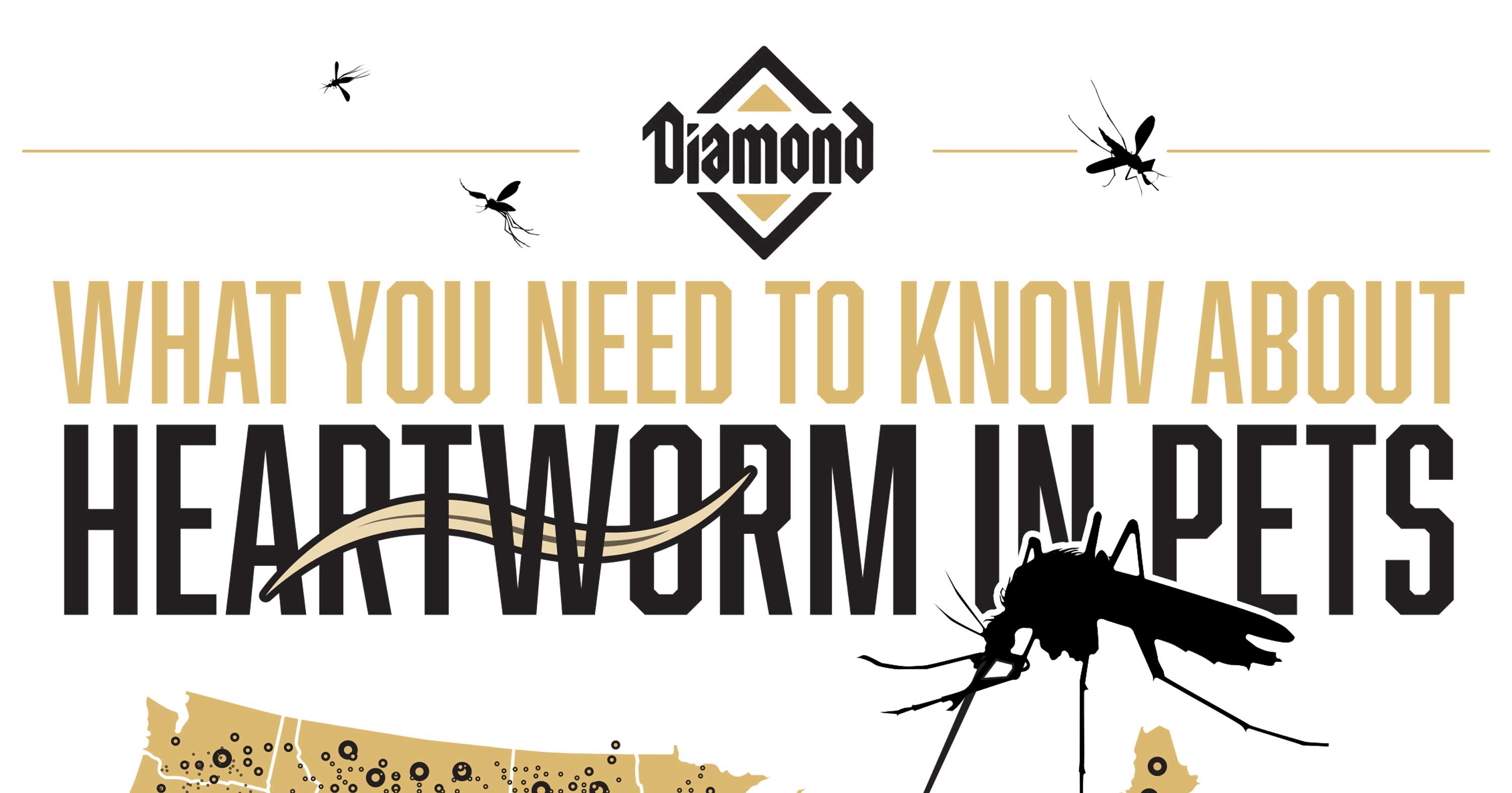 What You Need to Know About Heartworm in Pets | Diamond Pet Foods