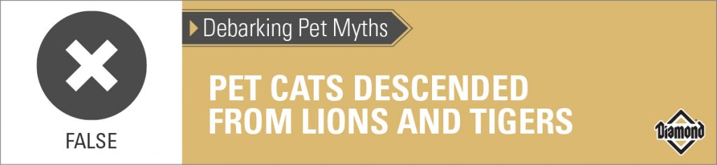 False: Cats Are Not Descended From Lions and Tigers | Diamond Pet Foods