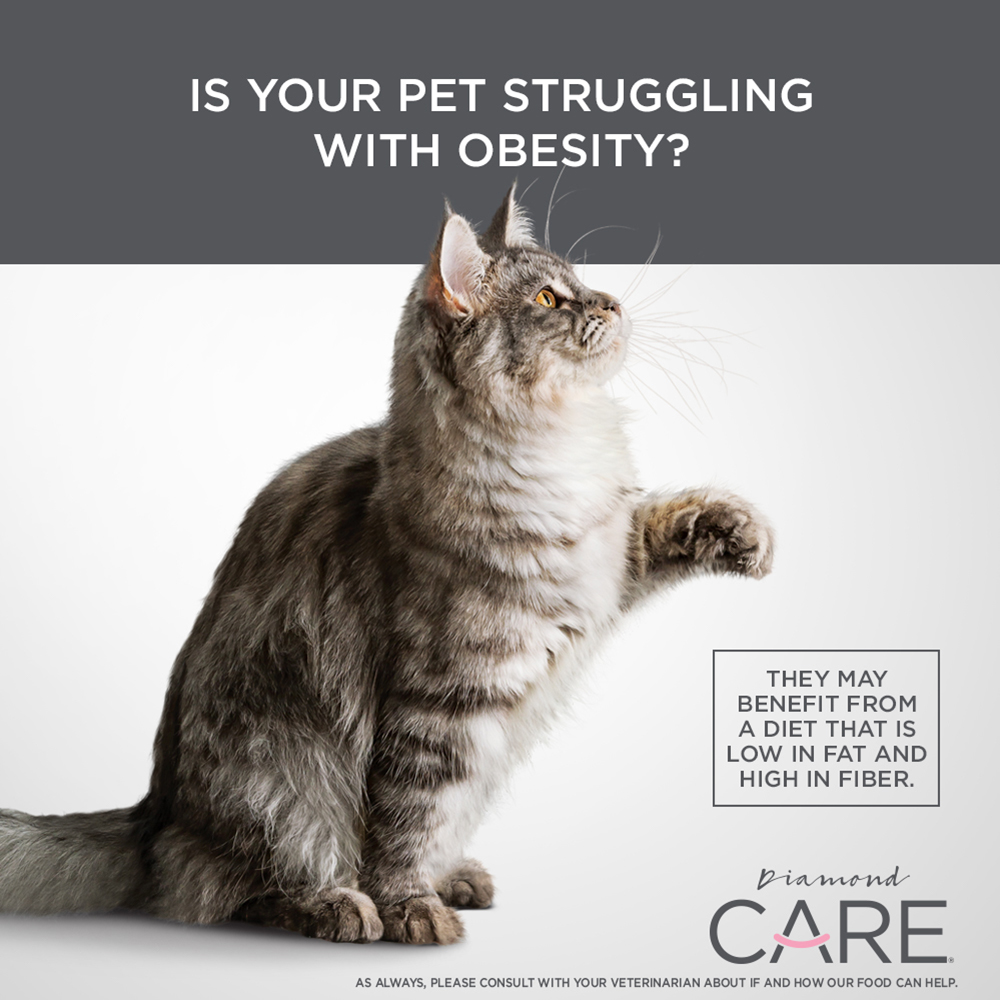pet struggling with any health issues