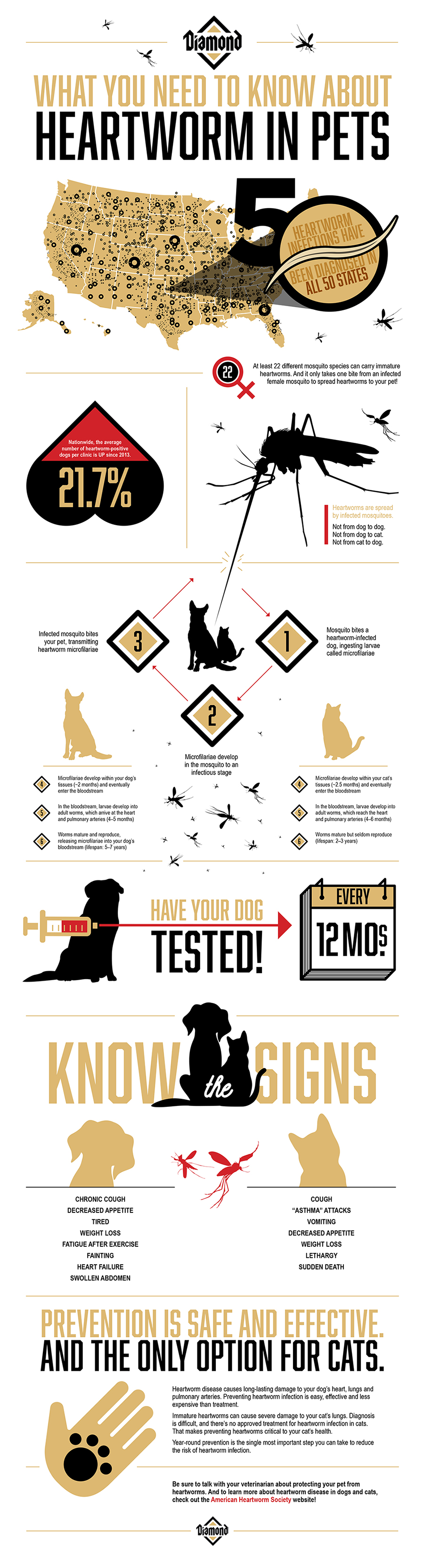 What You Need to Know About Heartworm in Pets Infographic | Diamond Pet Foods