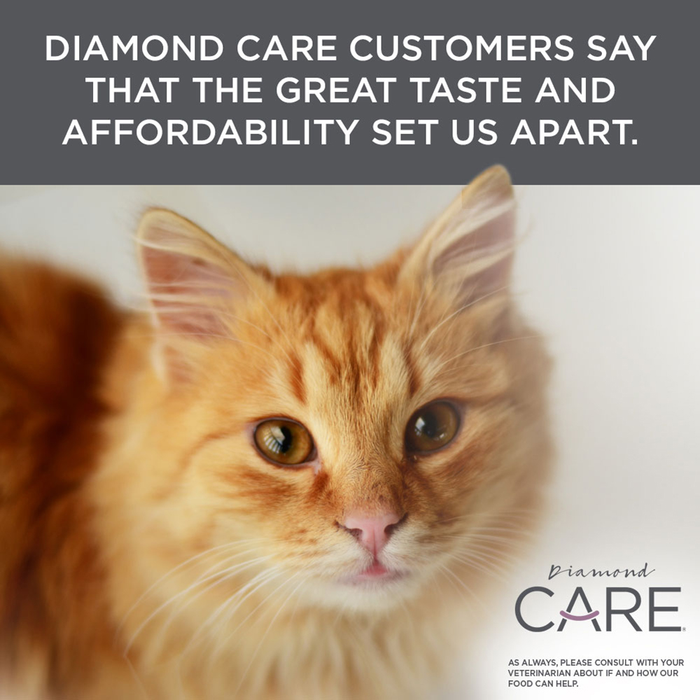 yellow tabby | Diamond CARE