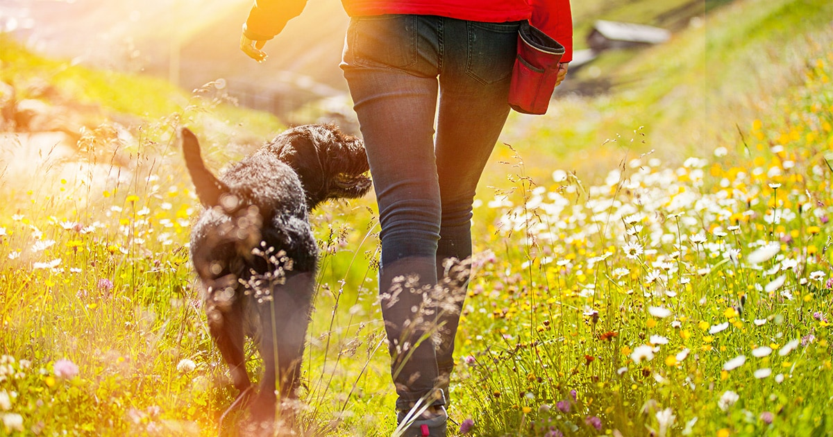 Black Dog and Owner Walking on a Field with Flowers | Diamond Pet Food