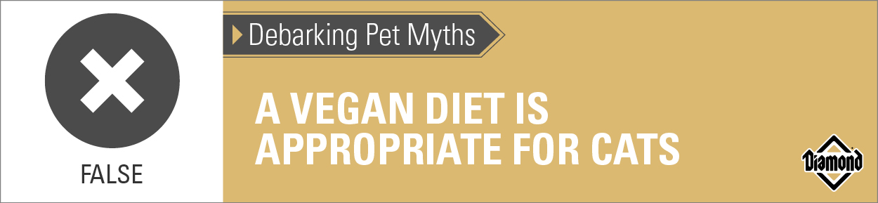 False: A Vegan Diet Is Not Appropriate for Cats | Diamond Pet Foods