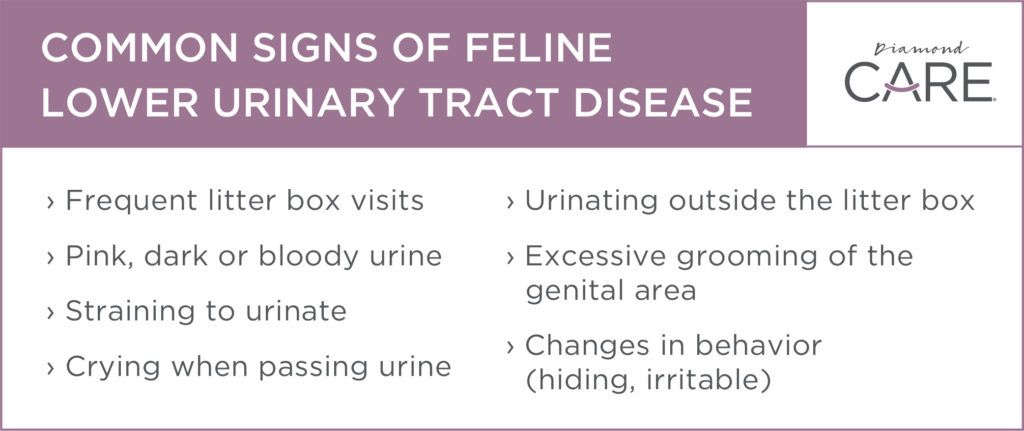 Common Signs of Feline Lower Urinary Tract Disease | Diamond Pet Foods