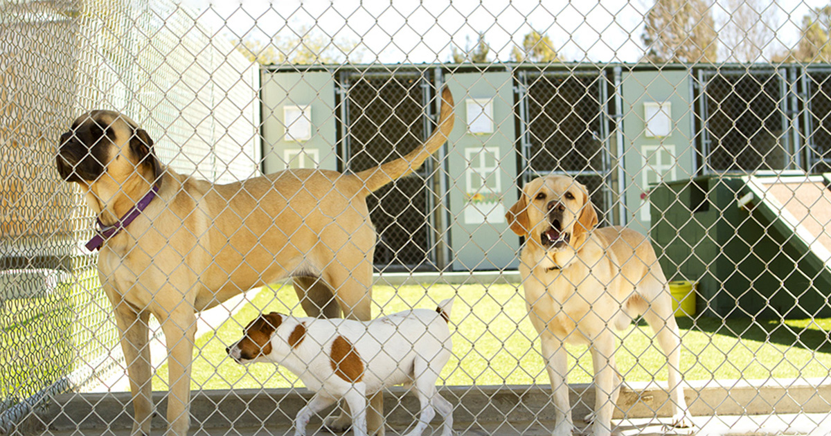 The Difference Between Pet Rescues and Shelters | Diamond