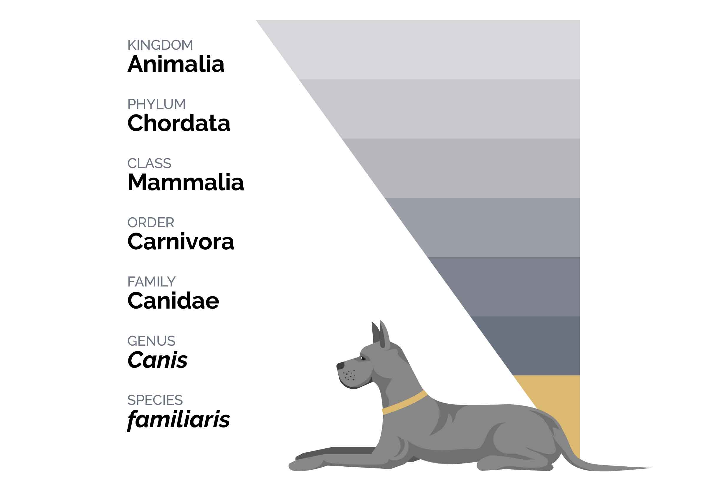 Graph Representing the Taxonomic Hierarchy of Dogs | Diamond Pet Foods