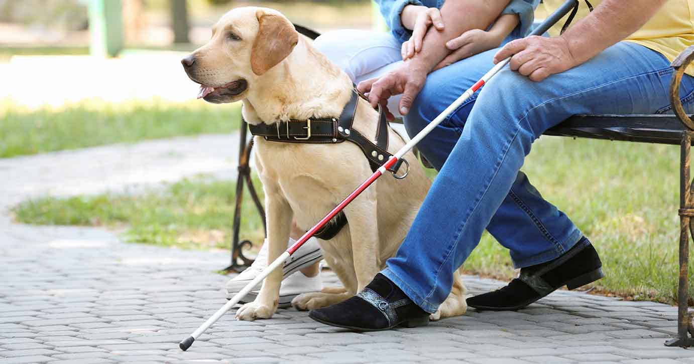 Young Woman and Blind Man with a Labrador Retriever Guide Dog Sitting on a Bench in the Park | Diamond Pet Foods