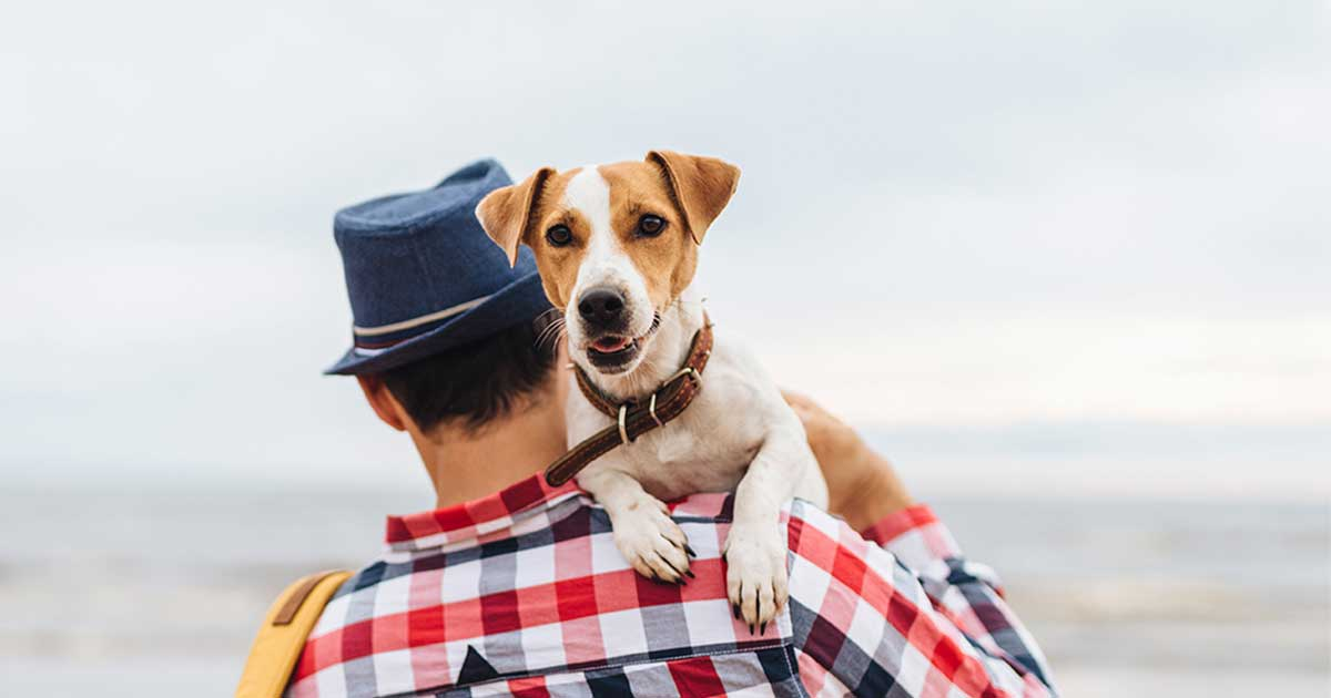 Man Wearing a Hat Carrying a Jack Russell Terrier Dog at the Beach | Diamond Pet Foods