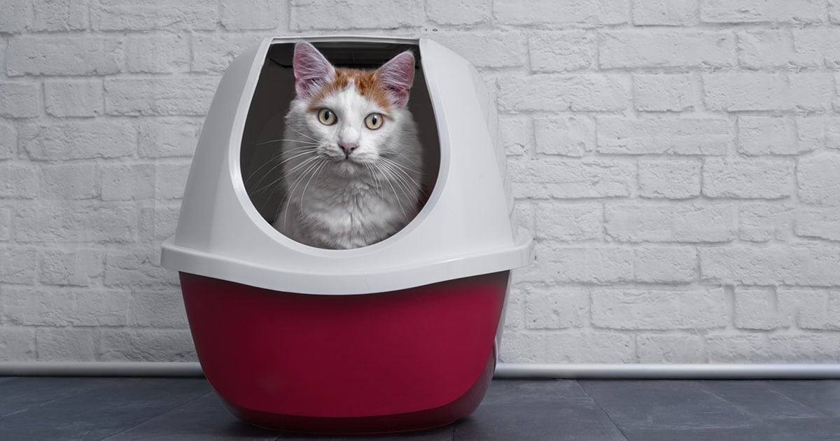 Tabby Cat Using a Red and Gray Enclosed Litter Box | Diamond Pet Foods