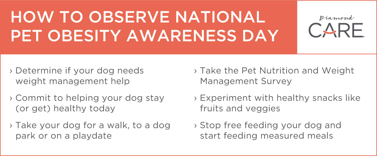 How to Observe National Pet Obesity Awareness Day | Diamond Pet Foods