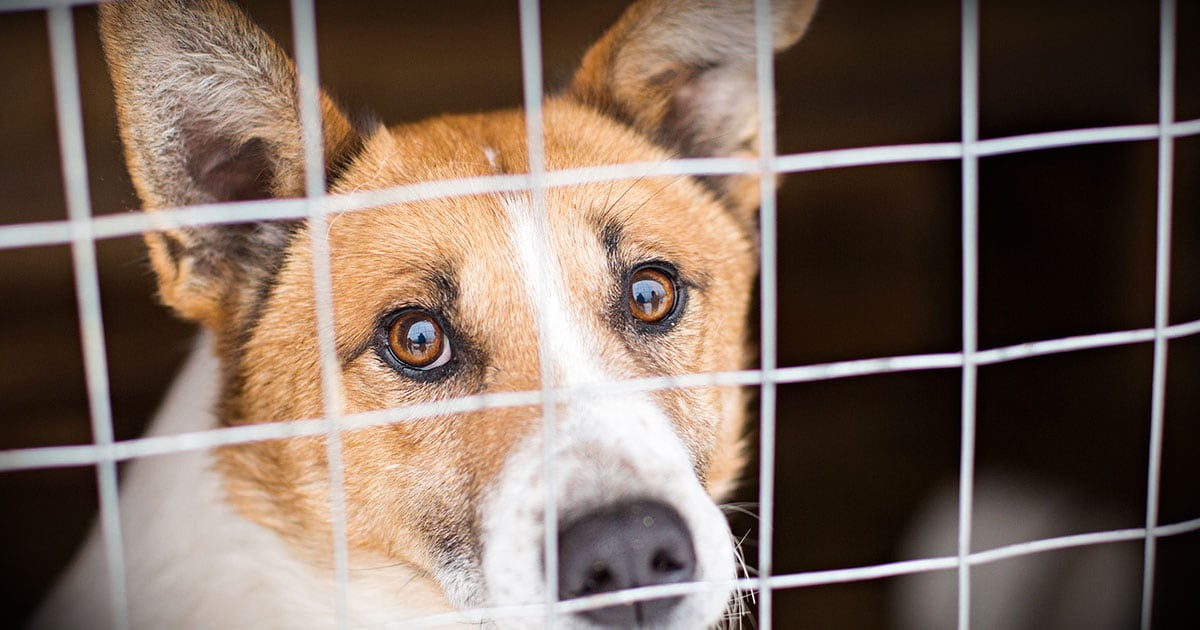 Rescue Dog in Kennel with the Hope of Finding a Home | Diamond Pet Foods