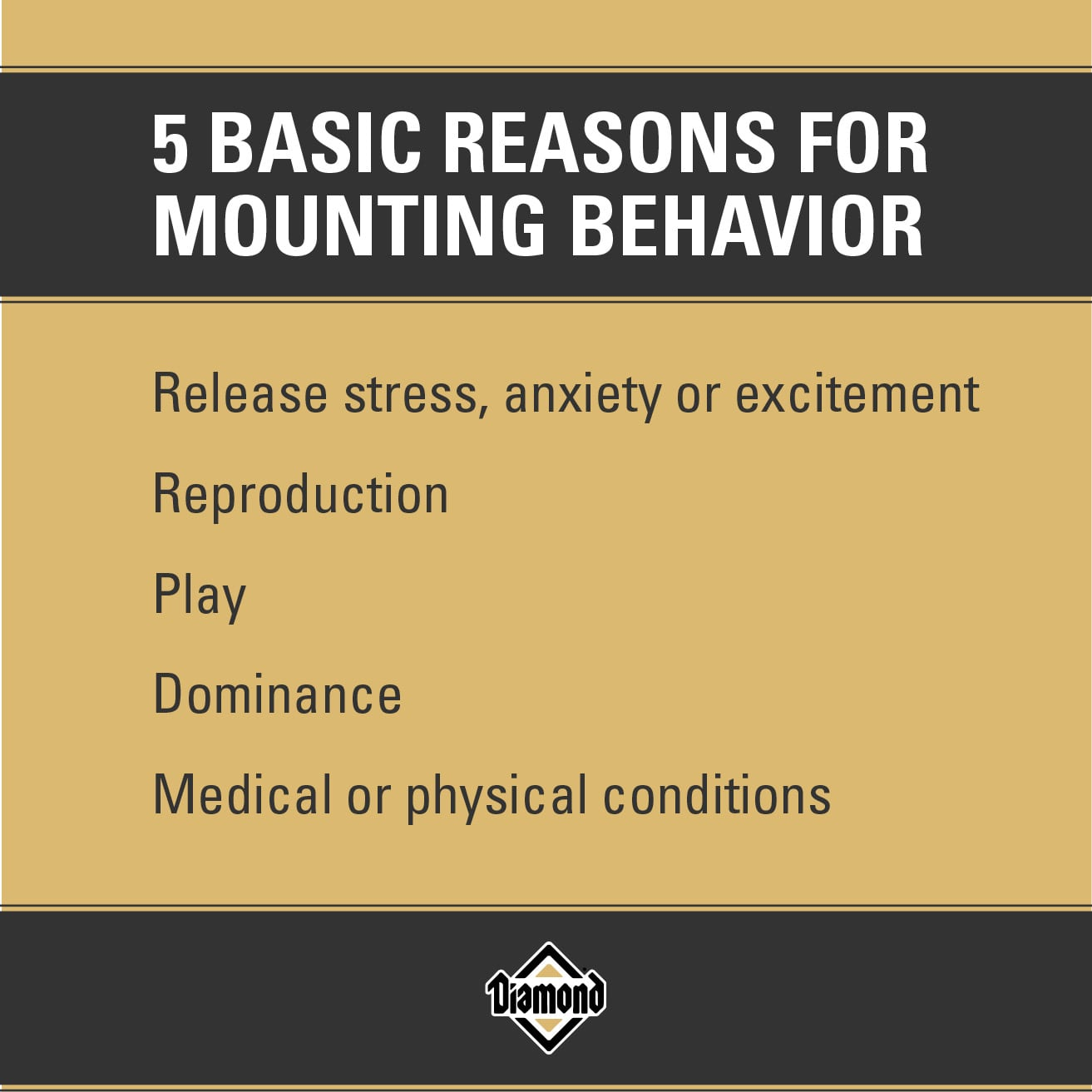 5 Basic Reasons for Mounting Behavior | Diamond Pet Foods