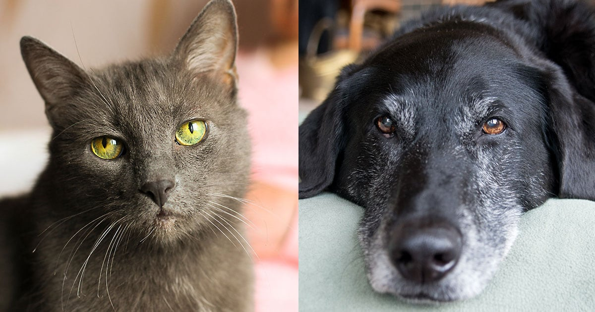 Image of a Senior Cat and Dog | Diamond Pet Foods