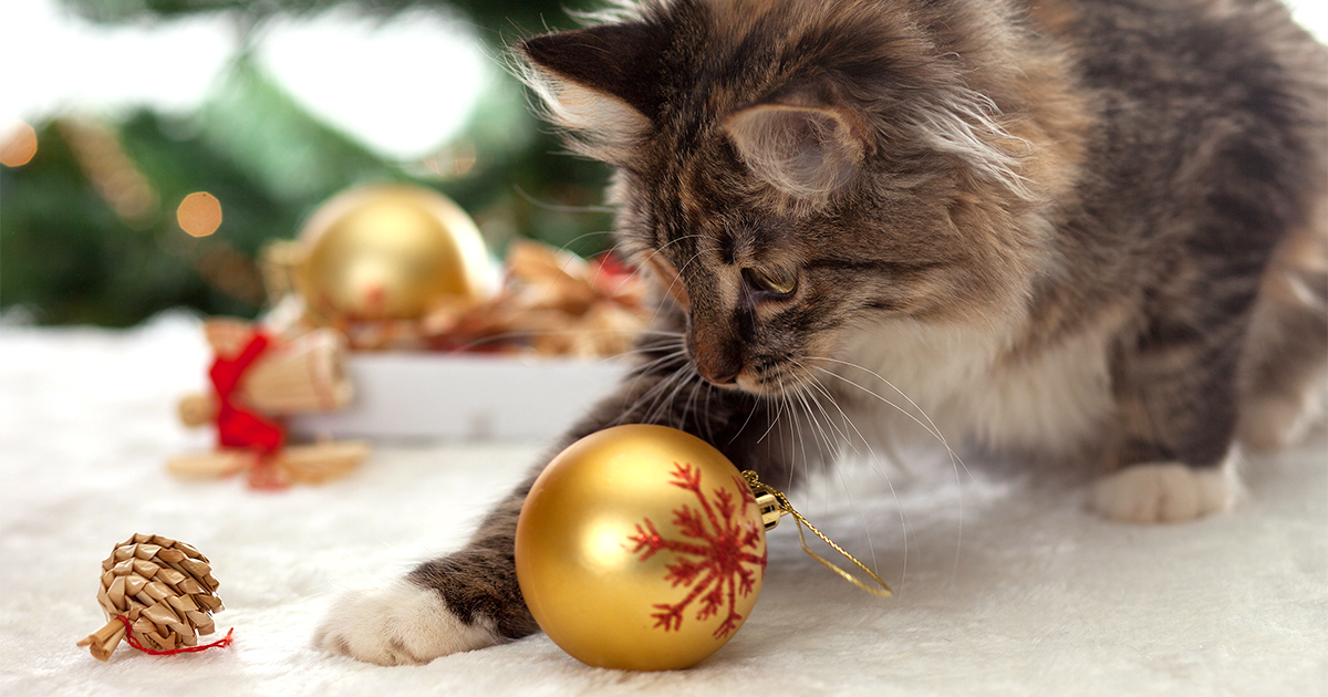 Fluffy Kitten Playing with Christmas Tree Ornaments | Diamond Pet Foods