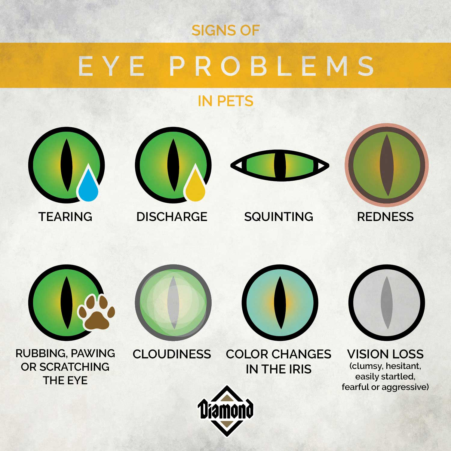 Signs of Eye Problems in Pets | Diamond Pet Foods
