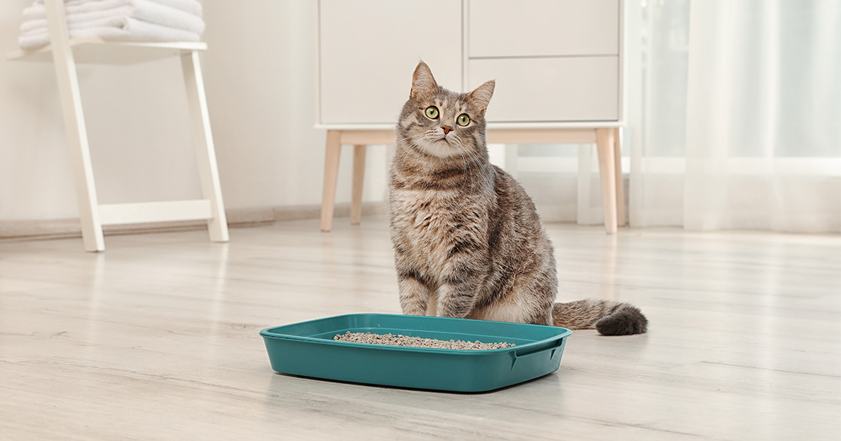 Cat Sitting Near Clean Litter Box | Diamond Pet Foods