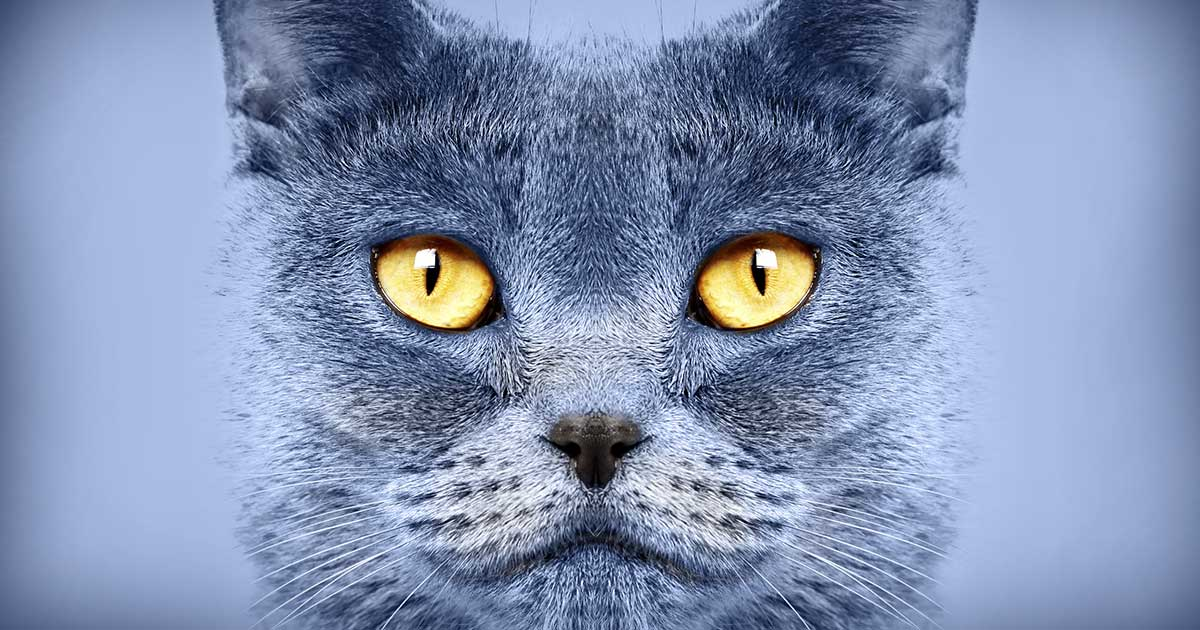 Cat with Glowing Eyes | Diamond Pet Foods