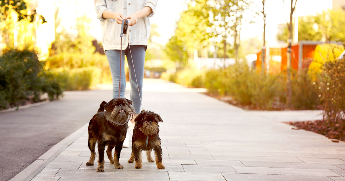 Woman Walking Two Dogs on a Leash | Diamond Pet Foods