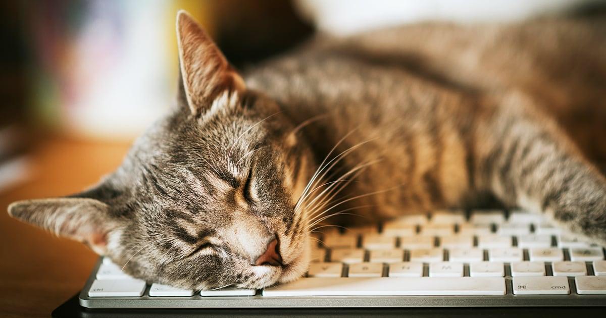 Cat Sleeping on White Computer Keyboard | Diamond Pet Foods