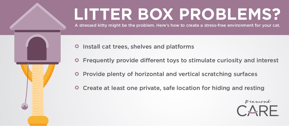 Tips for Stressed Cats with Litter Box Problems Infographic | Diamond Pet Foods