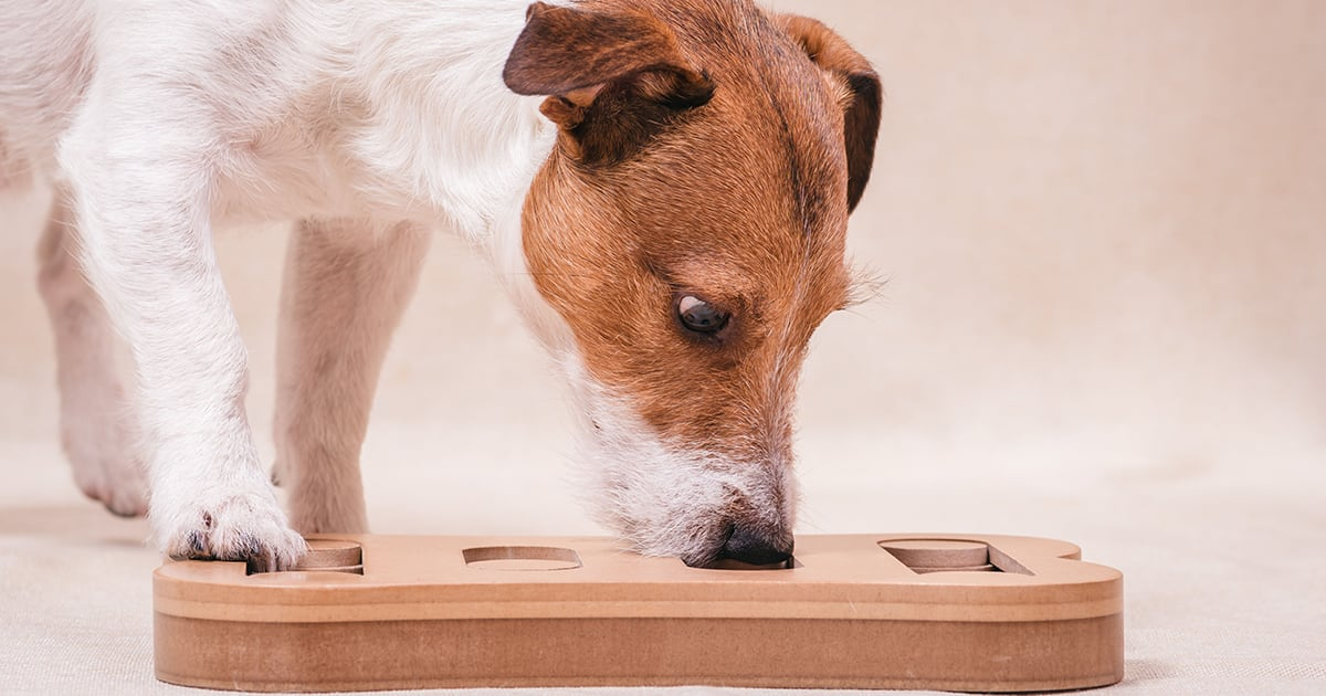 Dog Playing with a Wooden Game | Diamond Pet Foods