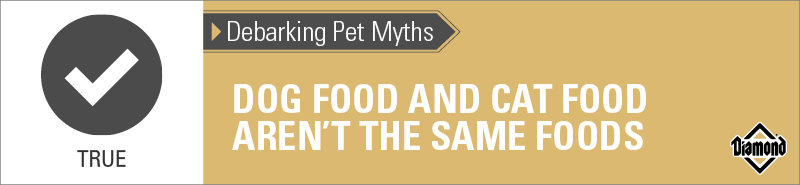 True: Dog Food and Cat Food Aren't the Same Foods | Diamond