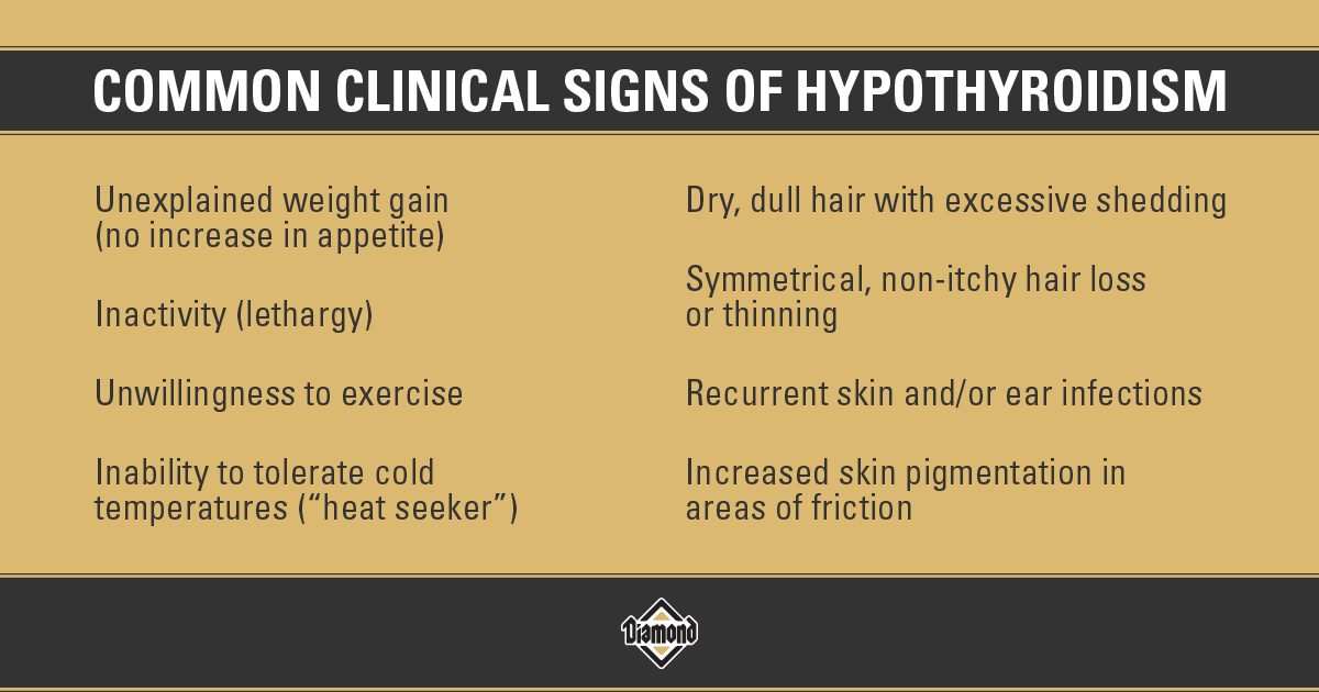 Common Clinical Signs of Hypothyroidism in Dogs Infographic | Diamond Pet Foods