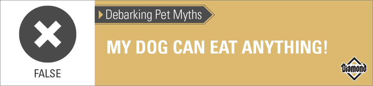 False: Dogs Cannot Eat Just Anything | Diamond Pet Foods