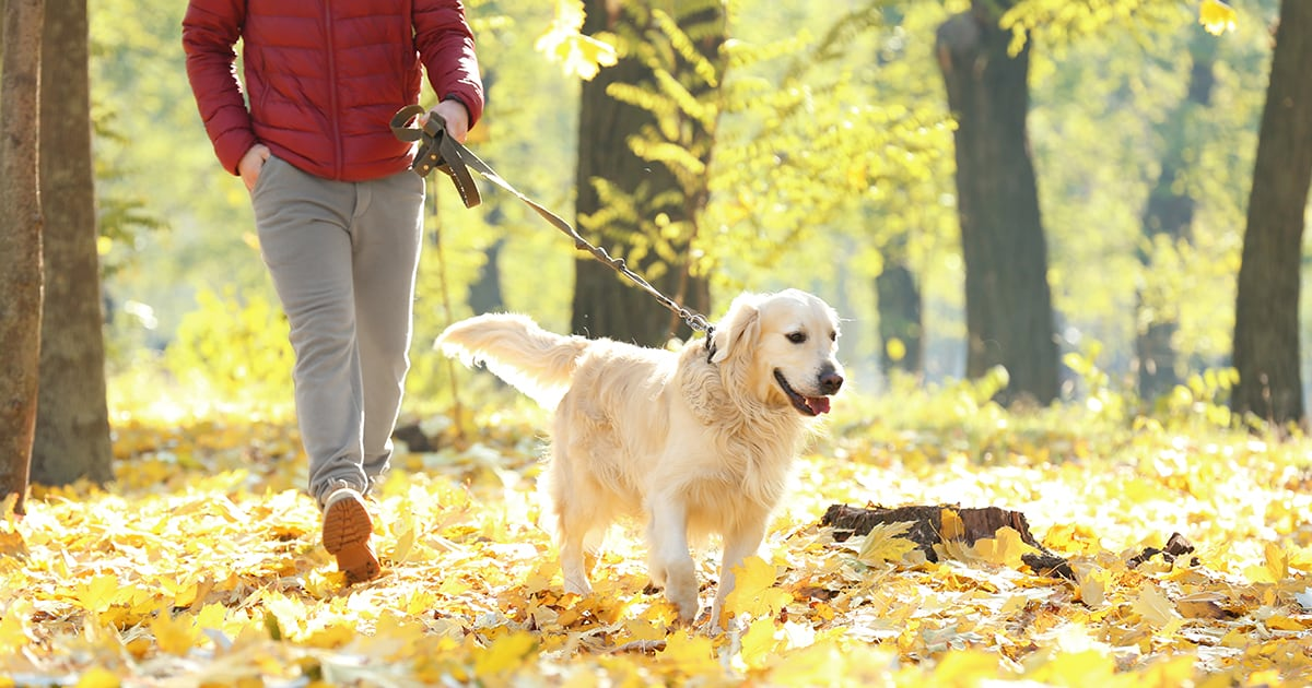 Owner Walking Dog on Autumn Leaves | Diamond Pet Foods