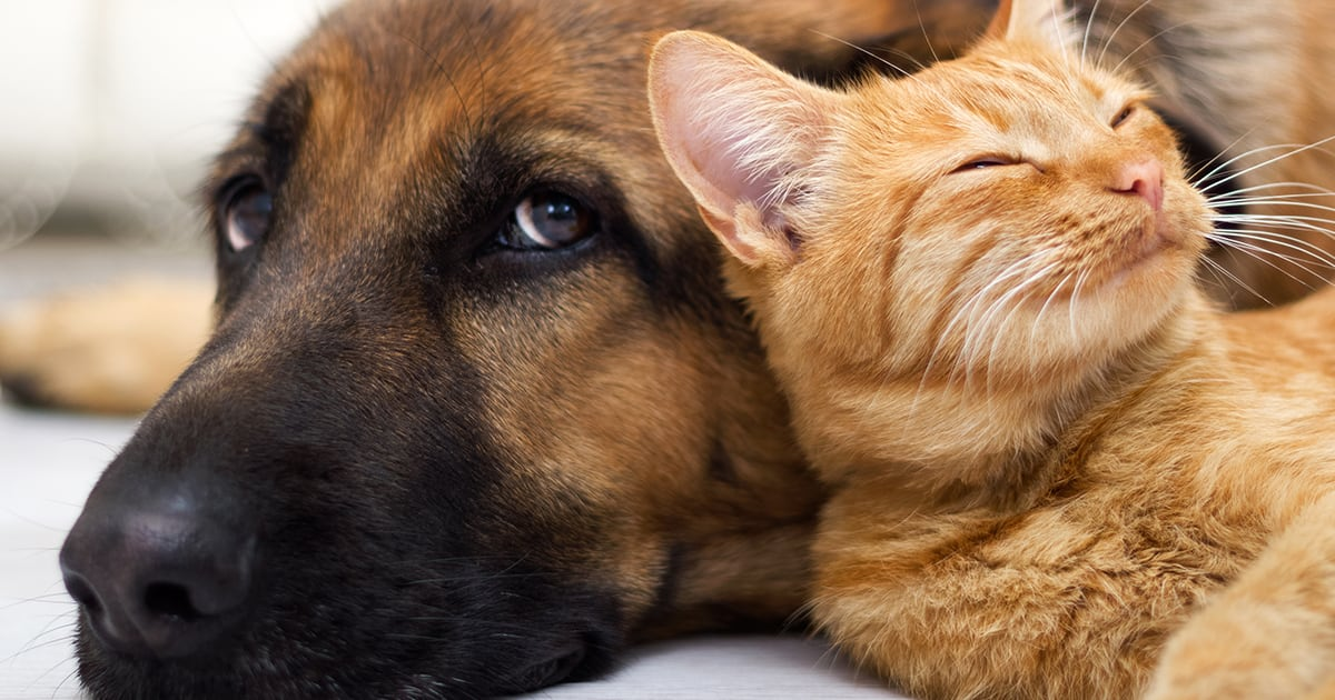 Cat Sleeping Beside Dog | Diamond Pet Foods