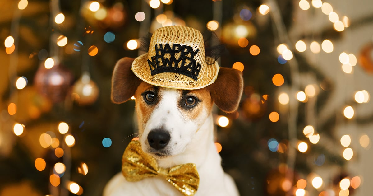 Dog Wearing Happy New Year Hat | Diamond Pet Foods
