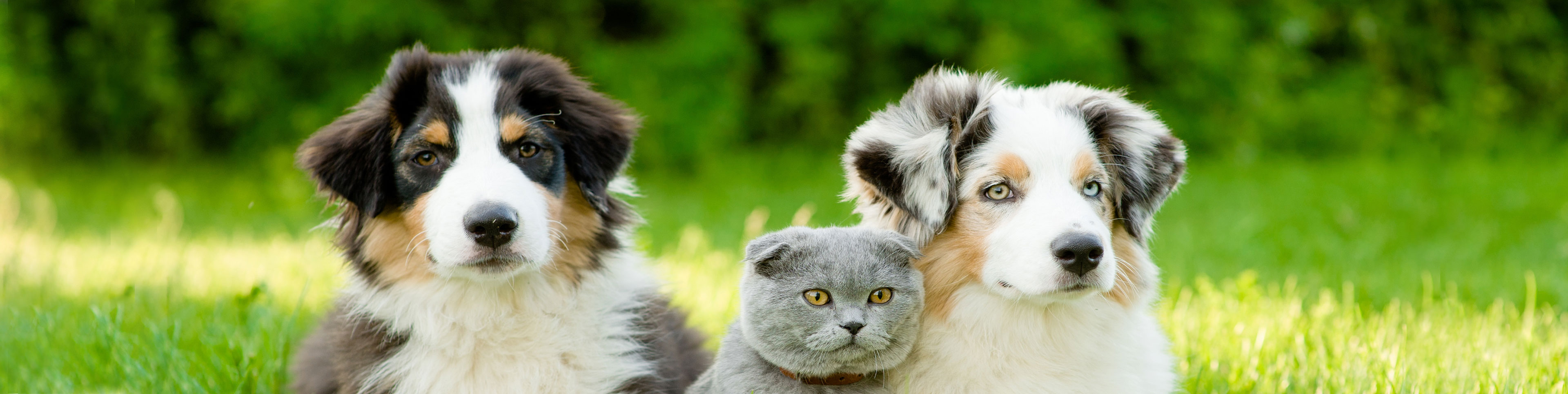 Close-Up of two Dogs and a Cat Outdoors | Taste of the Wild.
