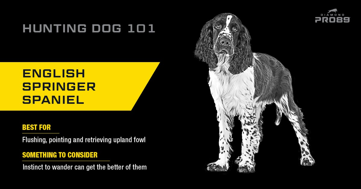 English Springer Spaniel Hunting Dog | Diamond Pet Foods