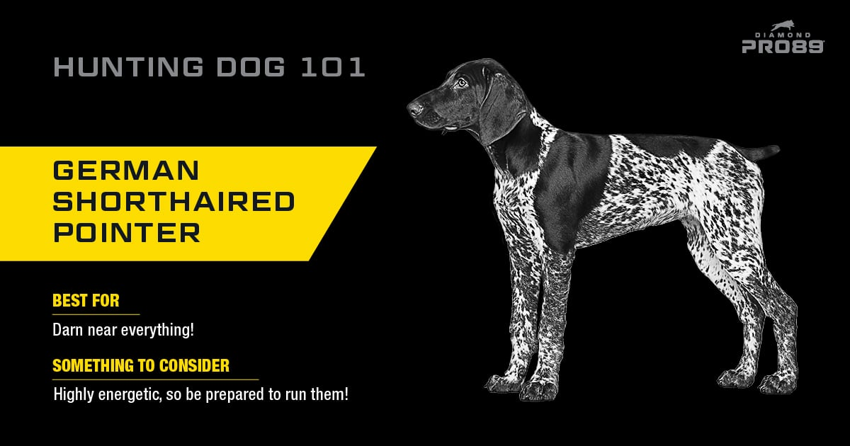 German Shorthaired Pointer Hunting Dog | Diamond Pet Foods