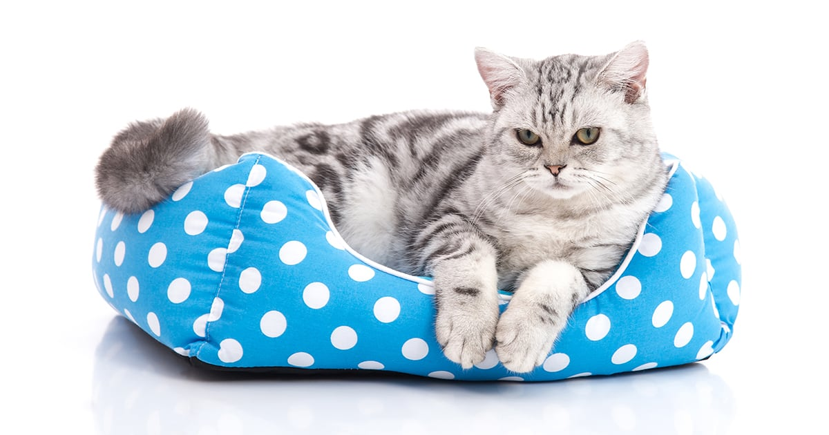 Cat in Cat Bed | Diamond Pet Foods