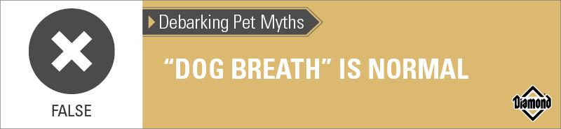 False: Dog Breath Is Not Normal | Diamond Pet Foods