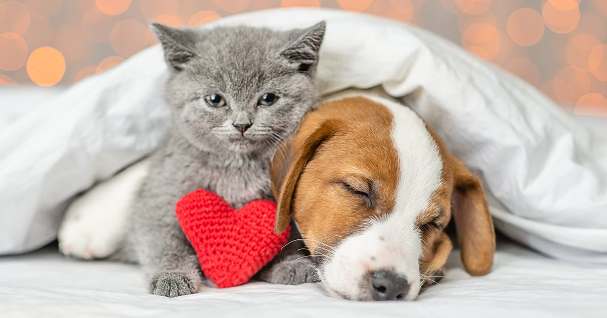 Kitten and Dog with Heart Toy | Diamond Pet Foods