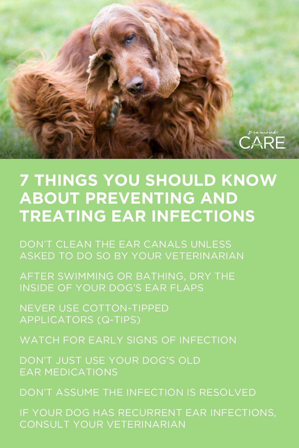 7 Things You Should Know About Preventing and Treating Ear Infections | Diamond Pet Foods