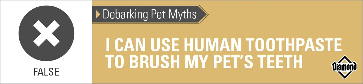 False: Human Toothpaste Should Not Be Used on Pets | Diamond Pet Foods