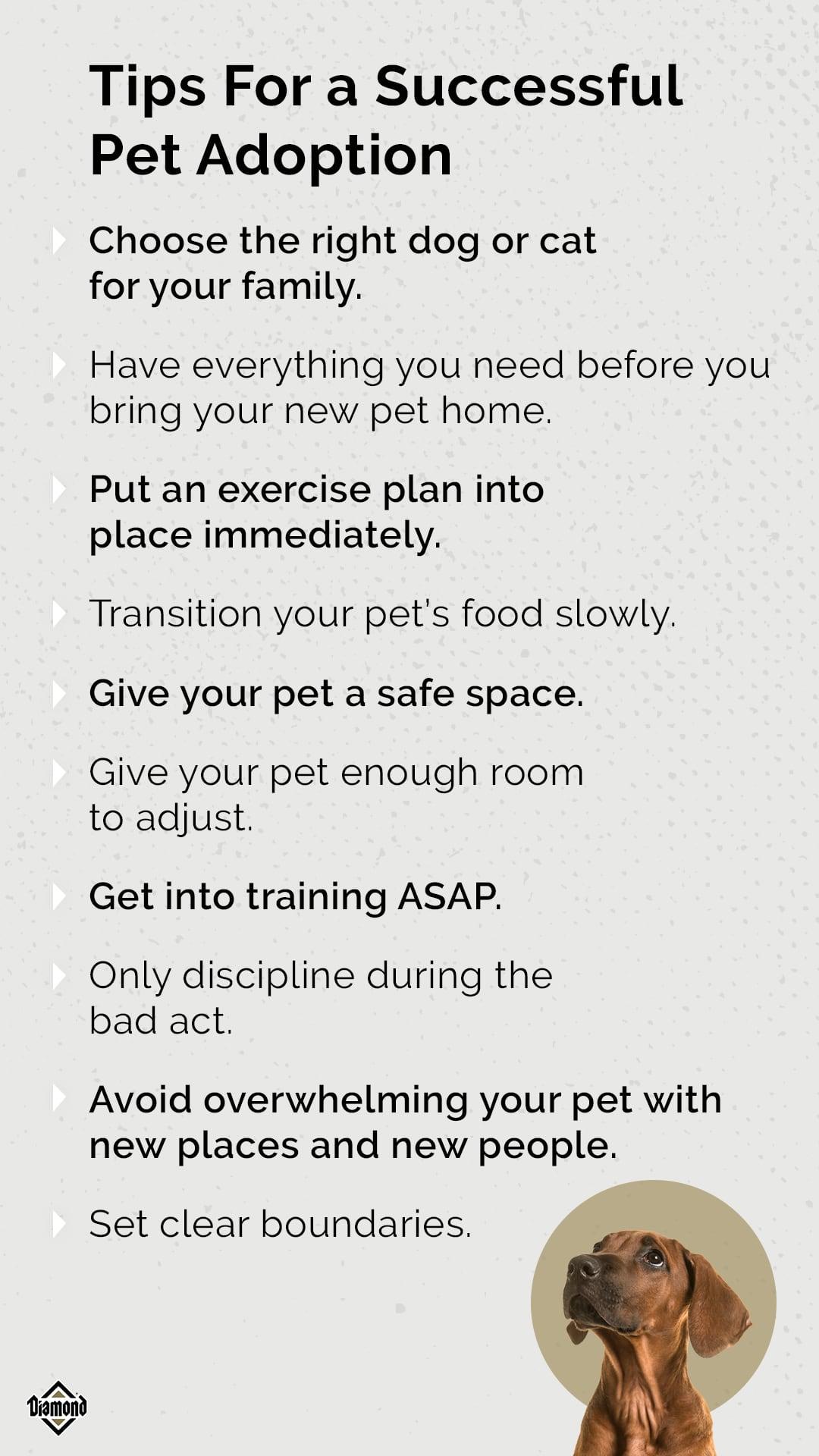 Tips for a Successful Pet Adoption | Diamond Pet Foods