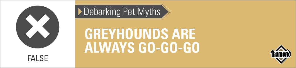 False: Greyhounds Are Not Always Go-Go-Go | Diamond Pet Foods