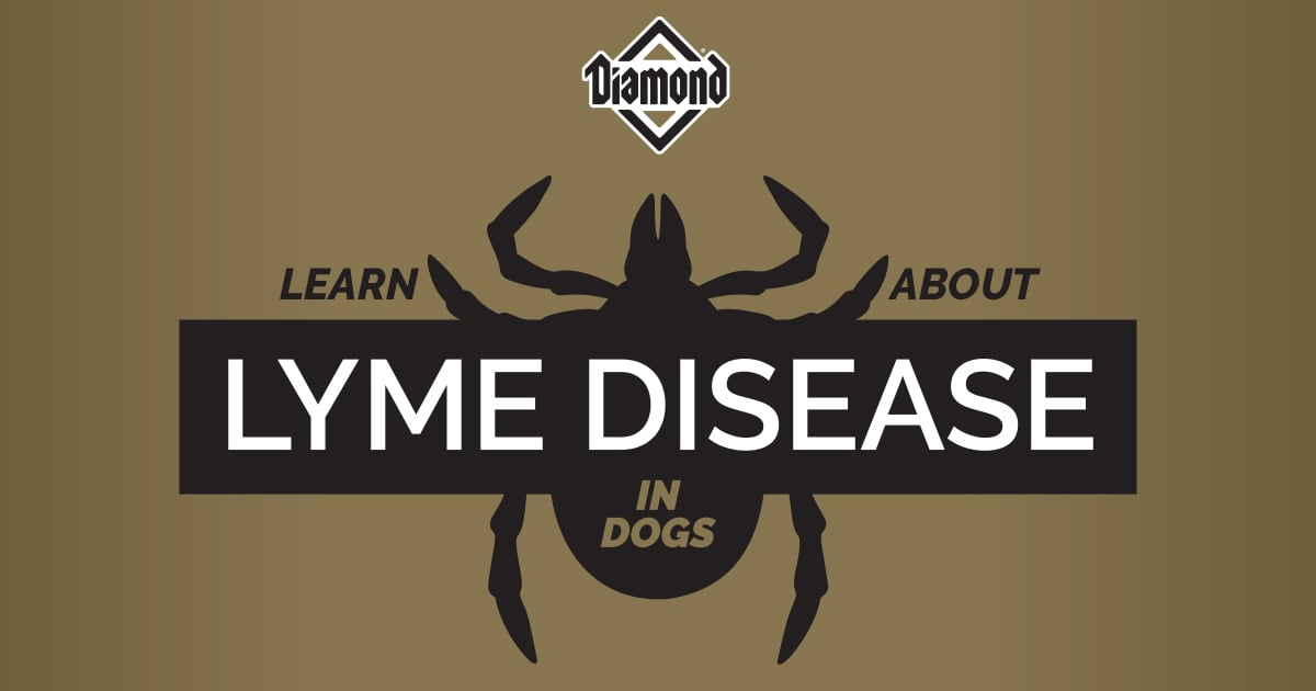 Learn About Lyme Disease in Dogs Header Graphic | Diamond Pet Foods