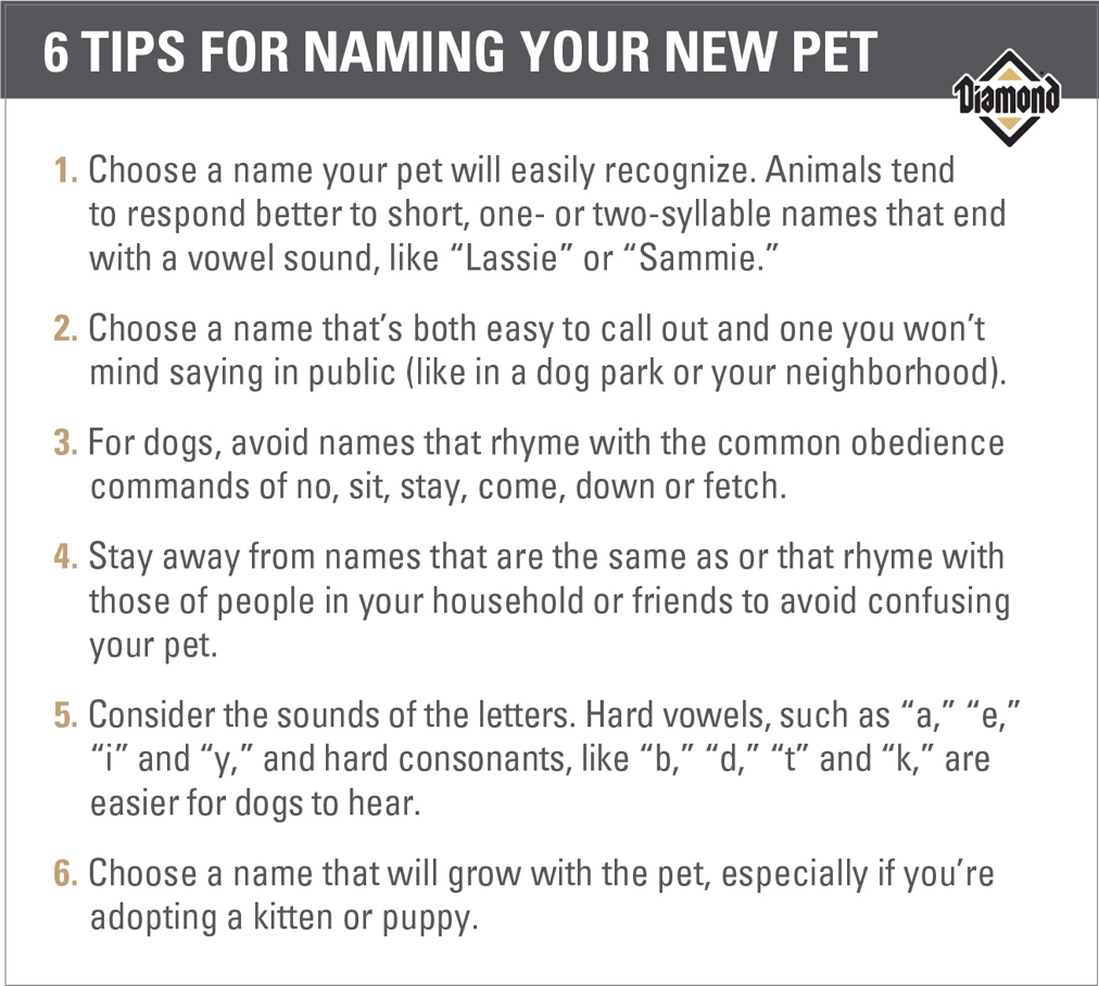 Six Tips for Naming Your New Pet Guide | Diamond Pet Foods