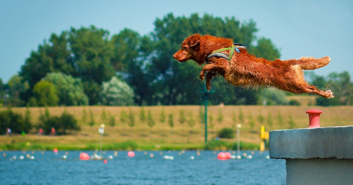 Dog Jumping into Water | Diamond Pet Foods