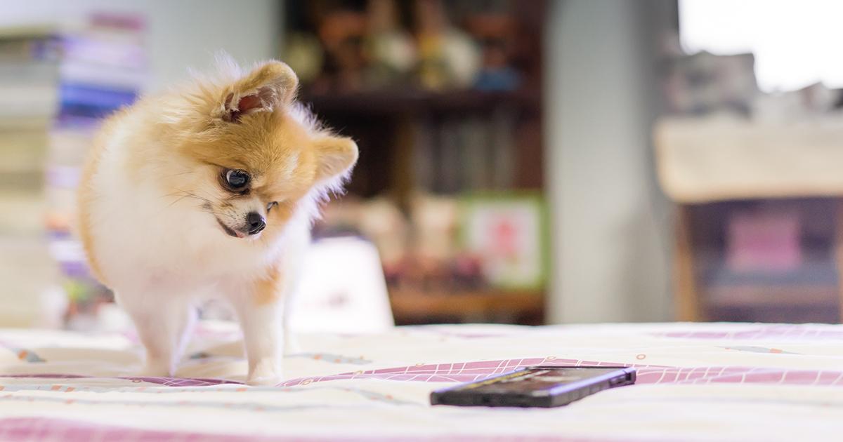 Dog Watching Phone Screen | Diamond Pet Foods