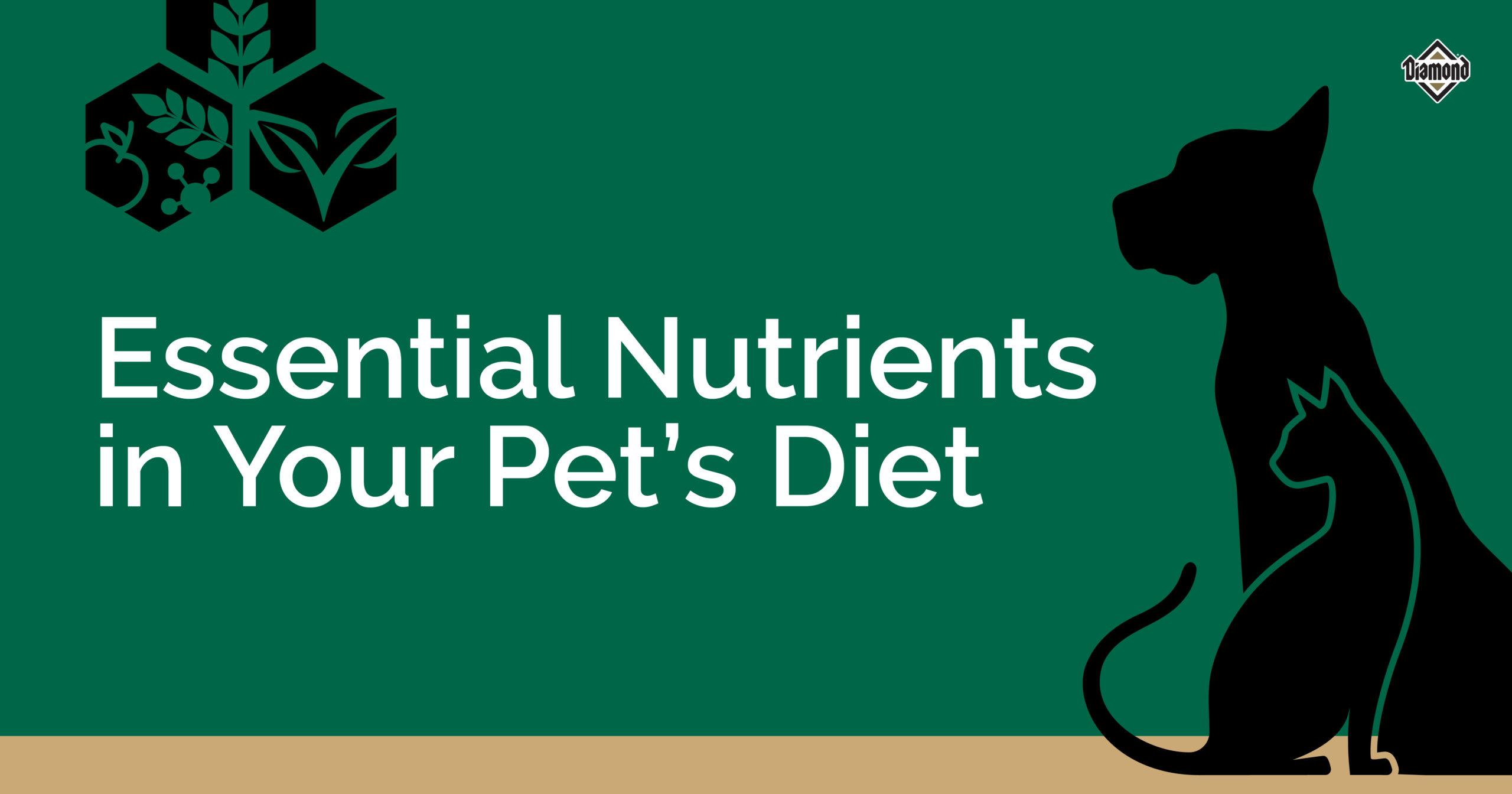Essential Nutrients in Your Pet's Diet | Diamond Pet Foods
