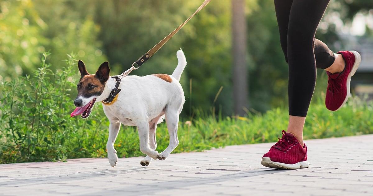 Woman Running Beside Dog on Leash | Diamond Pet Foods