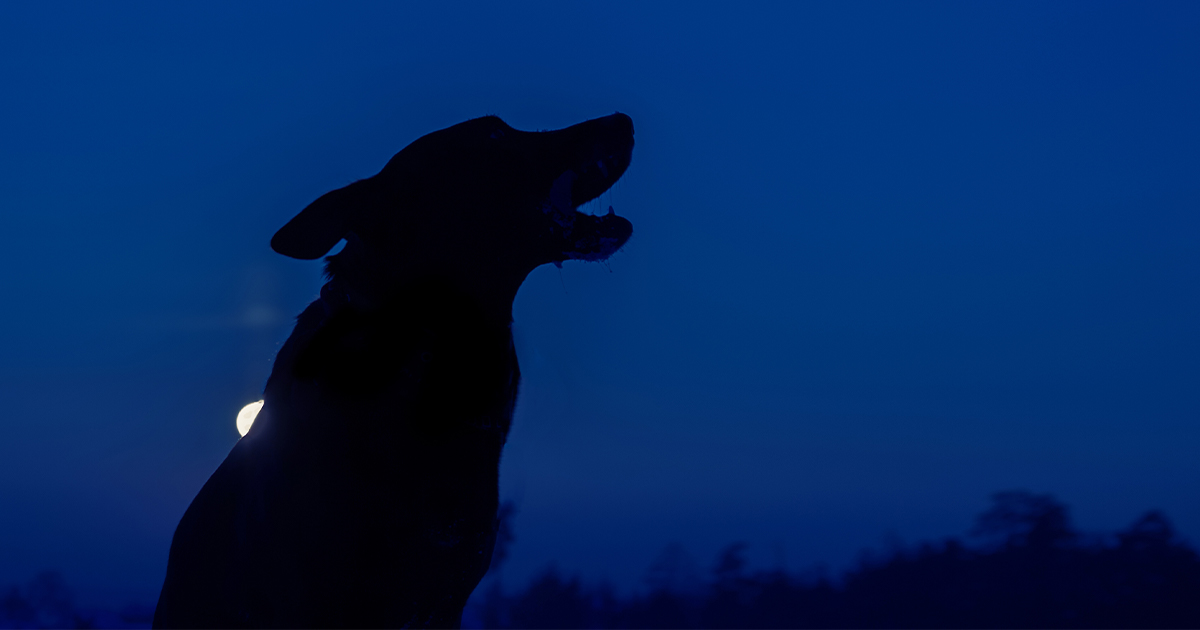 A Dog with the Moon Behind Them | Diamond Pet Foods